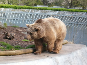 Photo of Berlin Bear at Koellnischer Park, Berlin Mitte