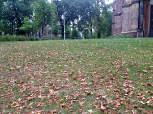 Berlin Weather: autumn leaves in August 2015