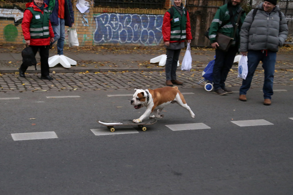 Berlin dog on skateboard IMG_1675