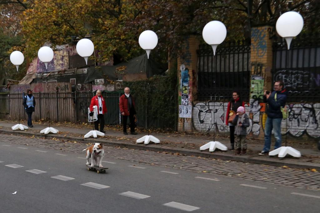 Berlin dog on skateboard