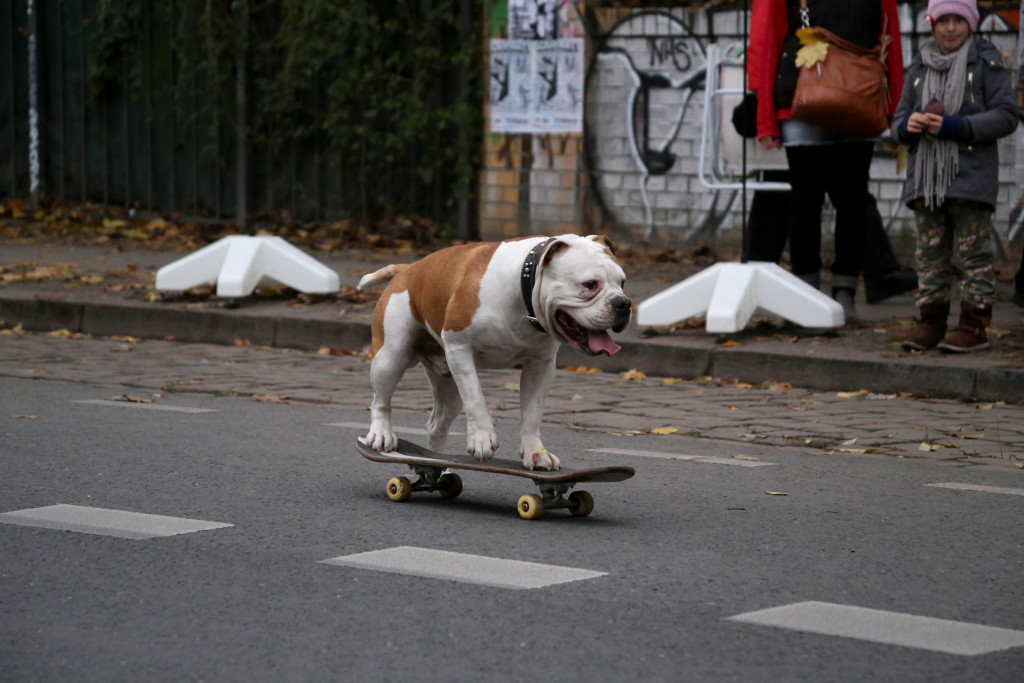 Berlin Kreuzberg: dog on a skateboard